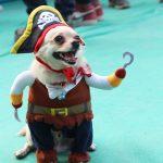 petfed mumbai, petfed india, dog fashion show, dog shows