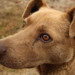dog killers india, dog news, animal cruelty, dogs killed,