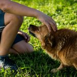 dog cancers, dogs detect cancers, dogs detect seizures, dogs detect diabetes, disease sensing dogs, therapy dogs