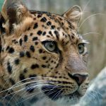 Leopard, Mumbai, Rescue, Spotted in housing society