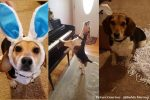 Buddy Mercury, NewsOnPets, Internet Sensations, Pet Dogs, Pianist