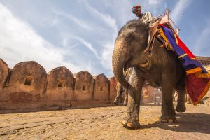 animal rides, travel animal rides, cleartrip animal rides, cleartrip animal policies, elephant rides, elephant rides cruelty